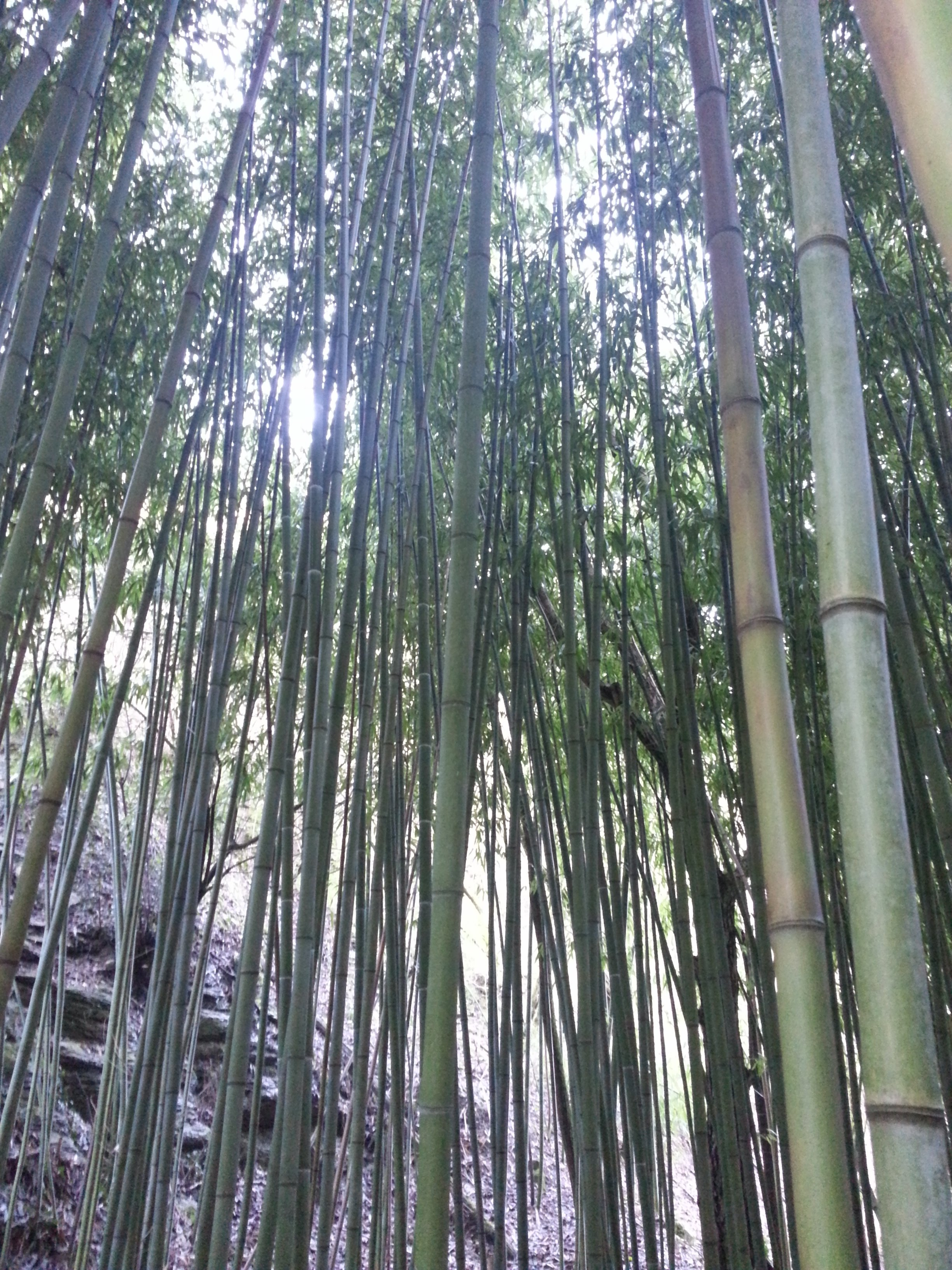 Closer look at the bamboo forest. Very zen moment for us